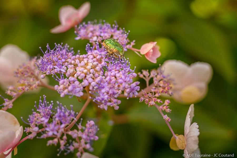 Une des merveilles du jardin de Mireille