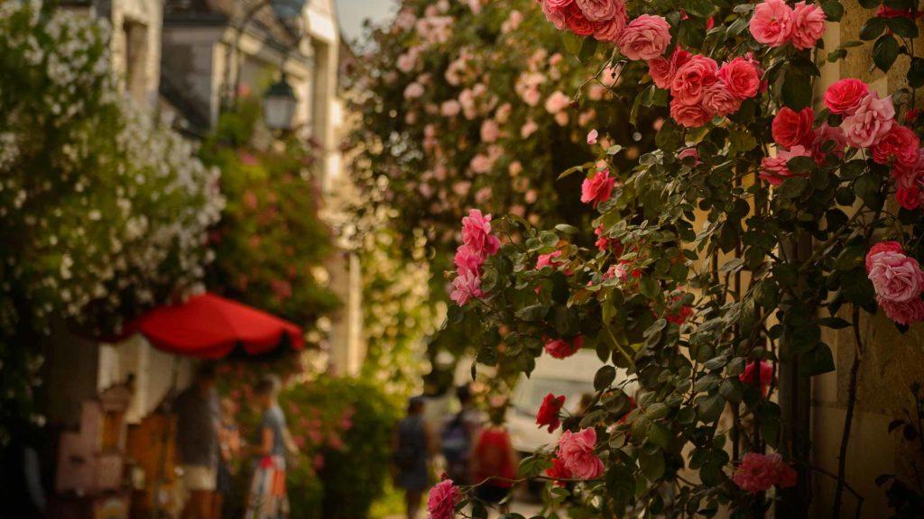 Les roses du village-jardin de Chédigny