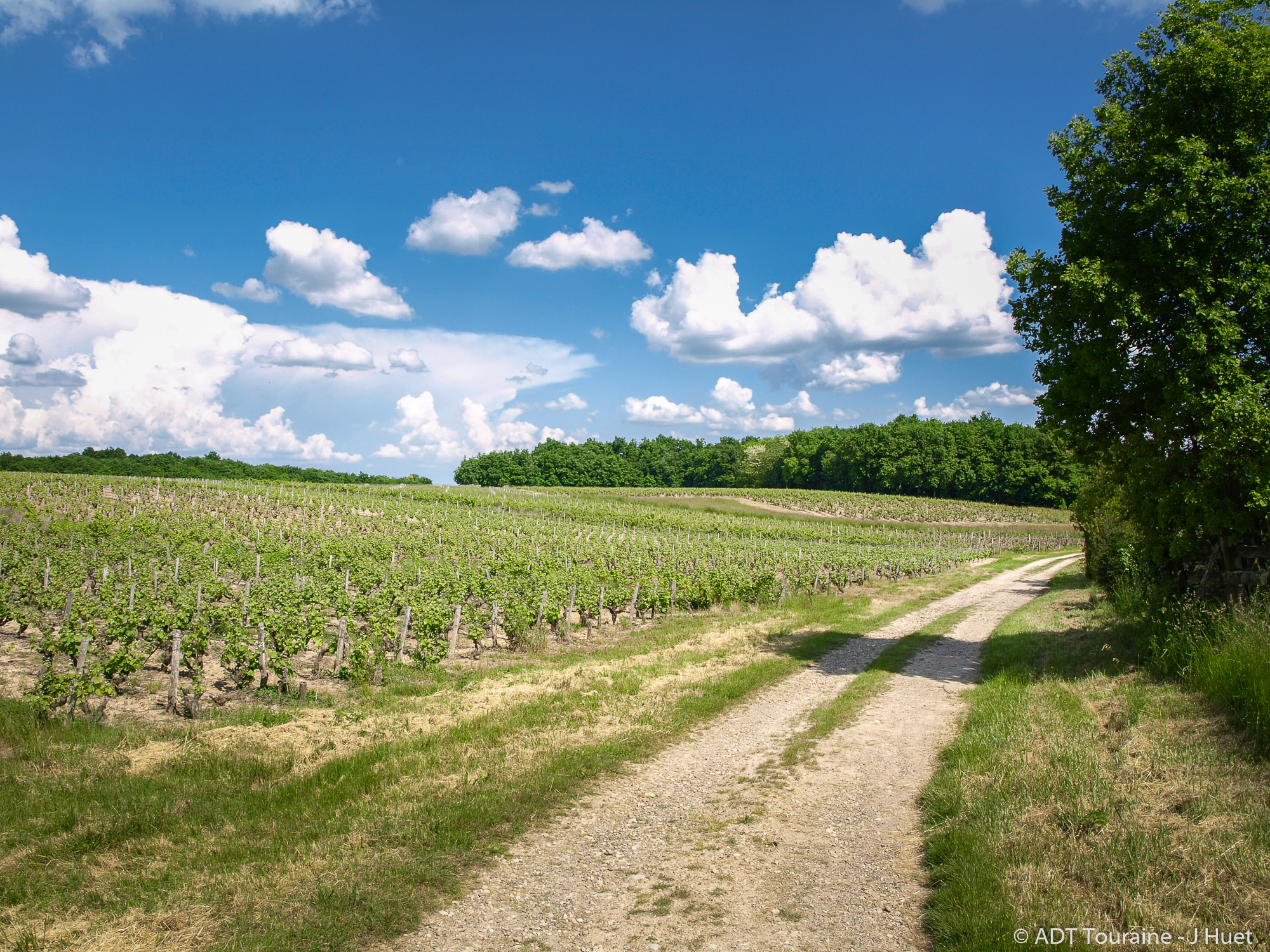 Route des vins du Val de Loire à Vouvray