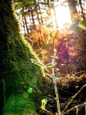 Forêt en Touraine