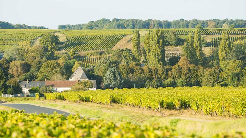 Le vignoble de Vouvray