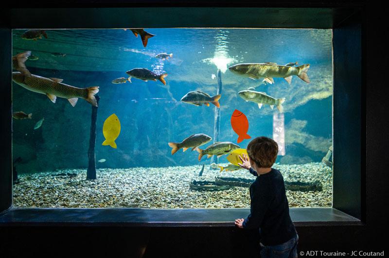 Le Grand Aquarium de Touraine, en Val de Loire. Entre Amboise et Tours, plein de poissons de Loire et des eaux tropicales à voir, et notamment un bassin tactile.
