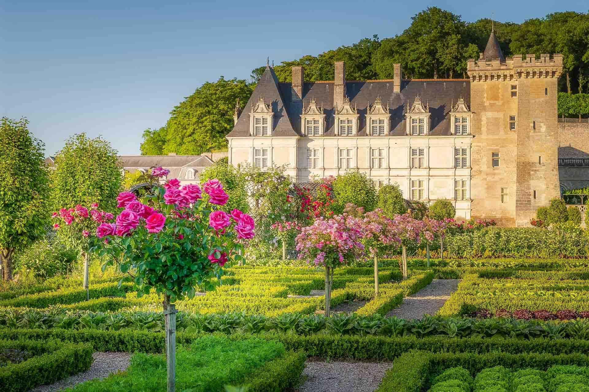 Les roses du jardin de Villandry