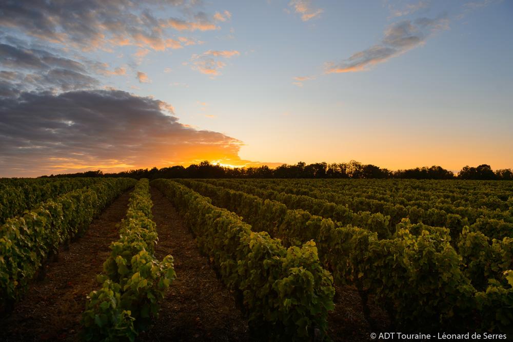 Rendez-vous dans les vignes au crépuscule - Appellation Vouvray