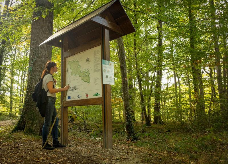 La forêt domaniale de Loches et ses nombreux chênes sessiles est propice à la randonnée pédestre, à l'ombre des arbres.