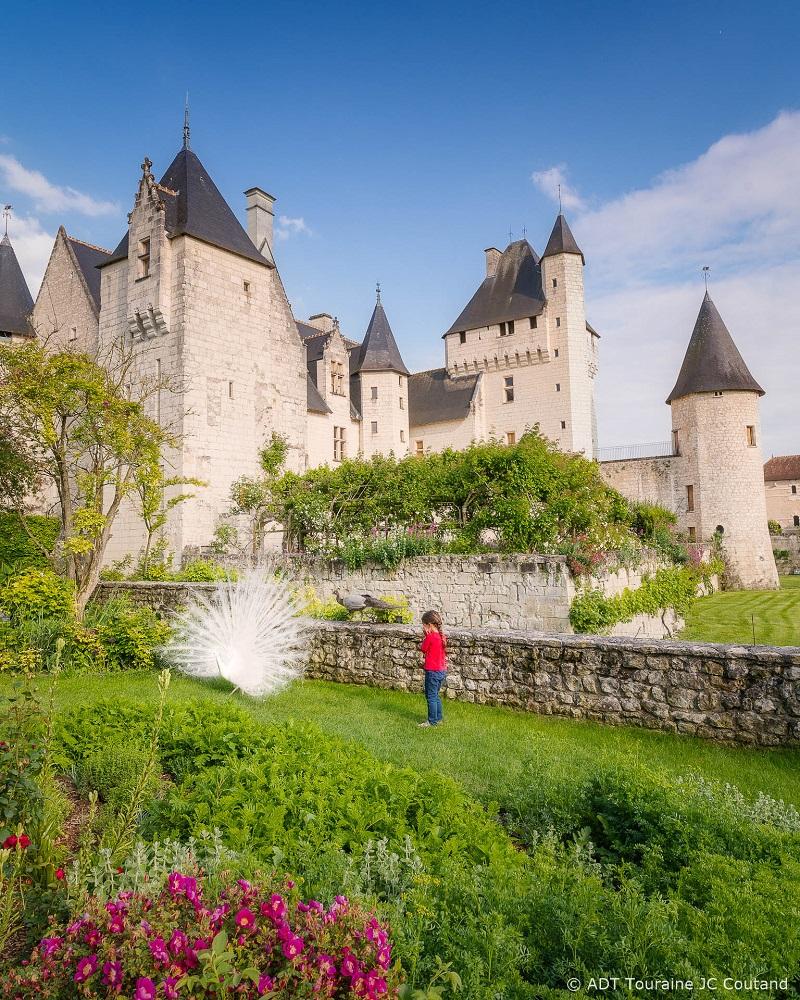 Gare au paon, au château du Rivau !