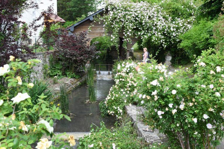 """Village de Chédigny """"Jardin Remarquable""""et fleur d'or-4"""