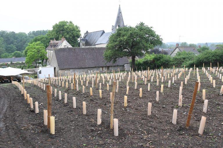 """Village de Chédigny """"Jardin Remarquable""""et fleur d'or-13"""