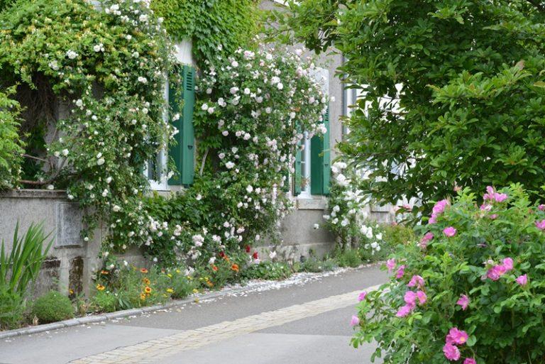 """Village de Chédigny """"Jardin Remarquable""""et fleur d'or-7"""