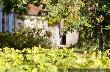 1-maison-dans-les-vignes_Interloire
