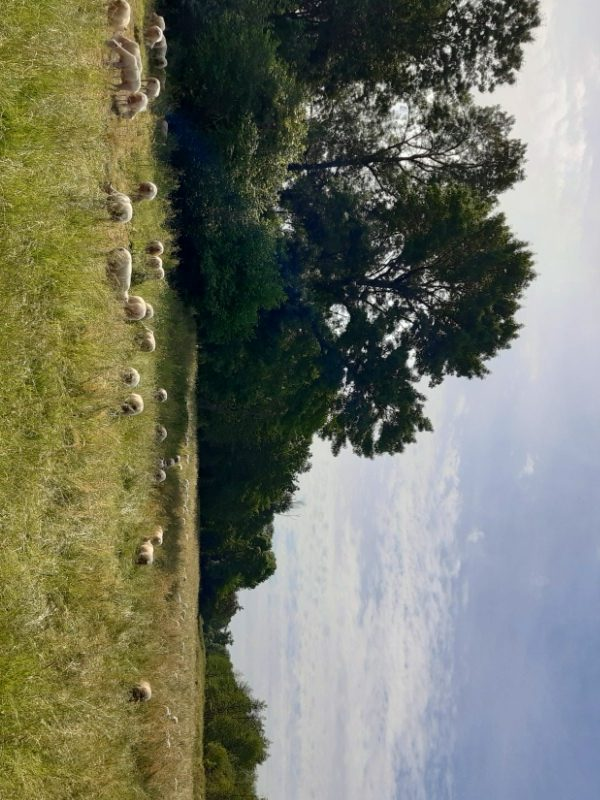 Espace Naturel Sensible du Val de Choisille-1