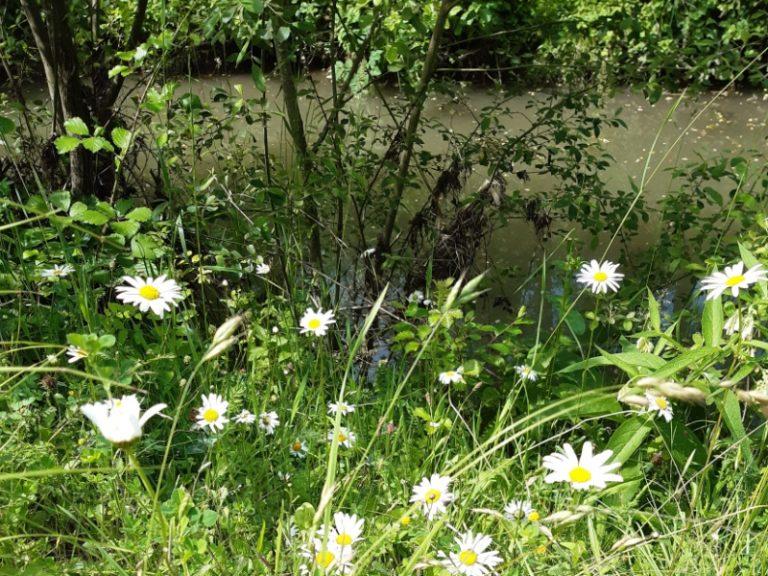 Randonnée de la rivière aux coteaux du Val de Choisille-8