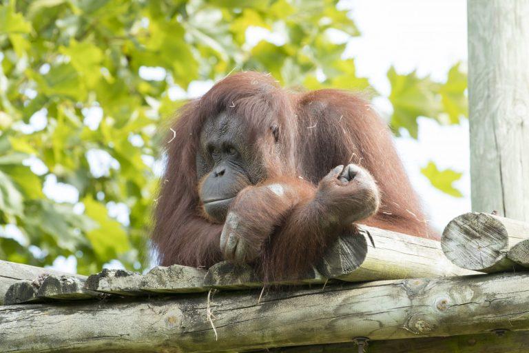 ZooParc de Beauval-11