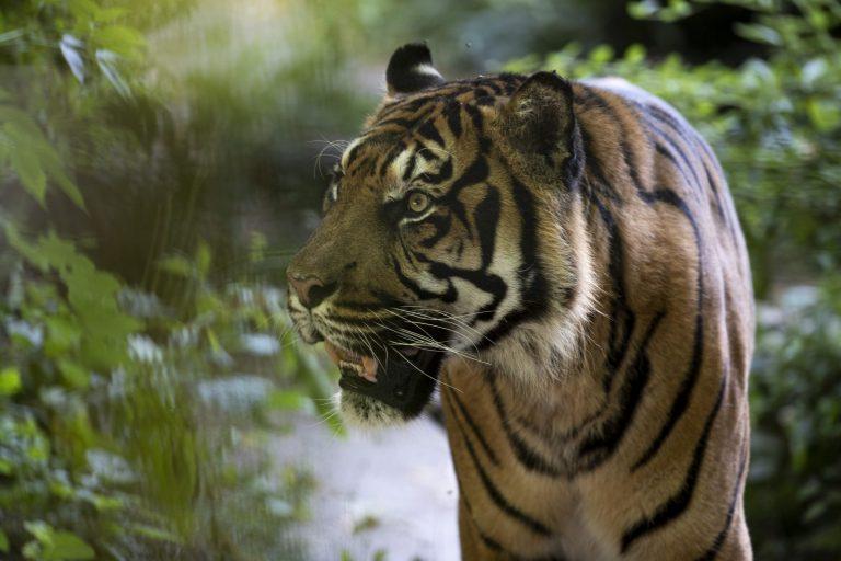 ZooParc de Beauval-10