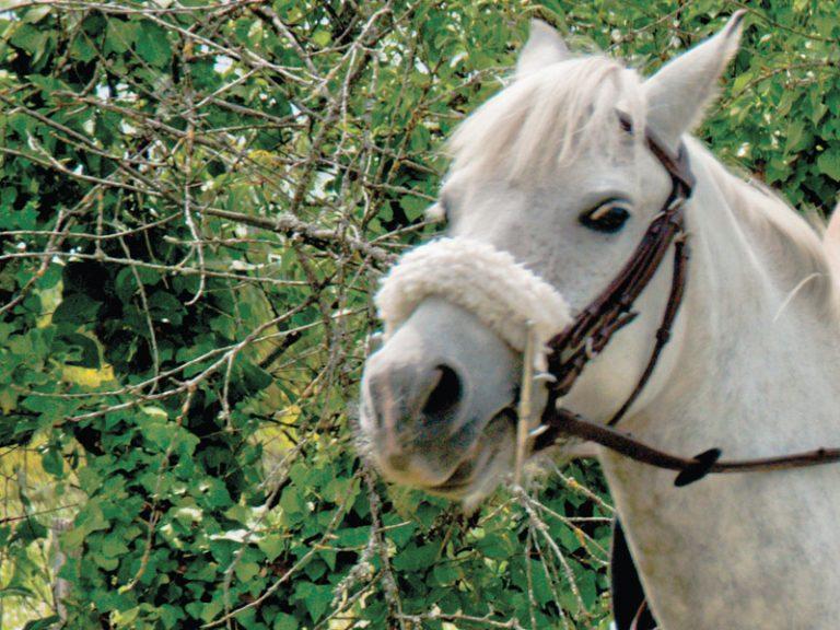 L'Alezane – enseignement équitation de loisirs et fédérale-2
