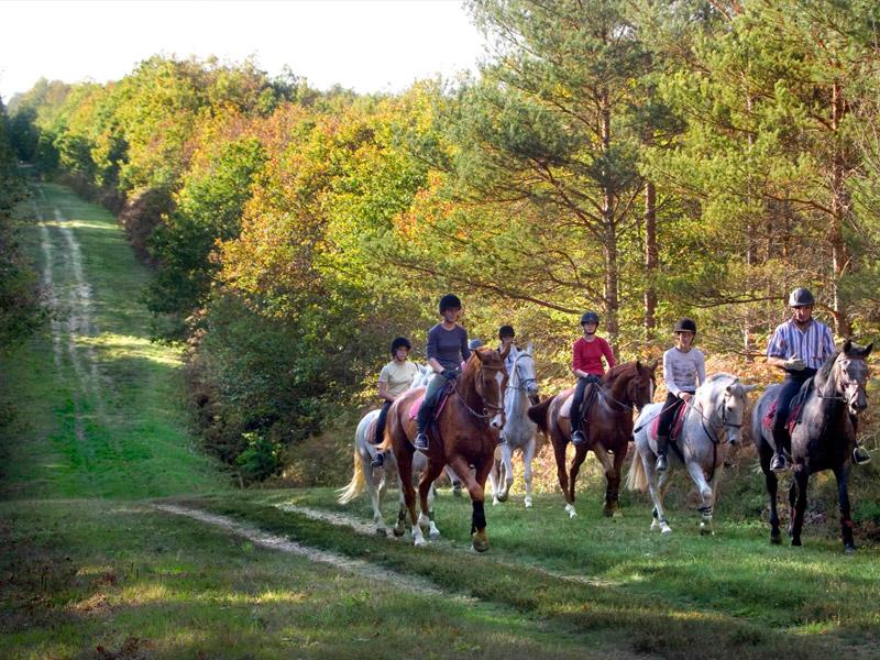 L'Alezane – enseignement équitation de loisirs et fédérale-1