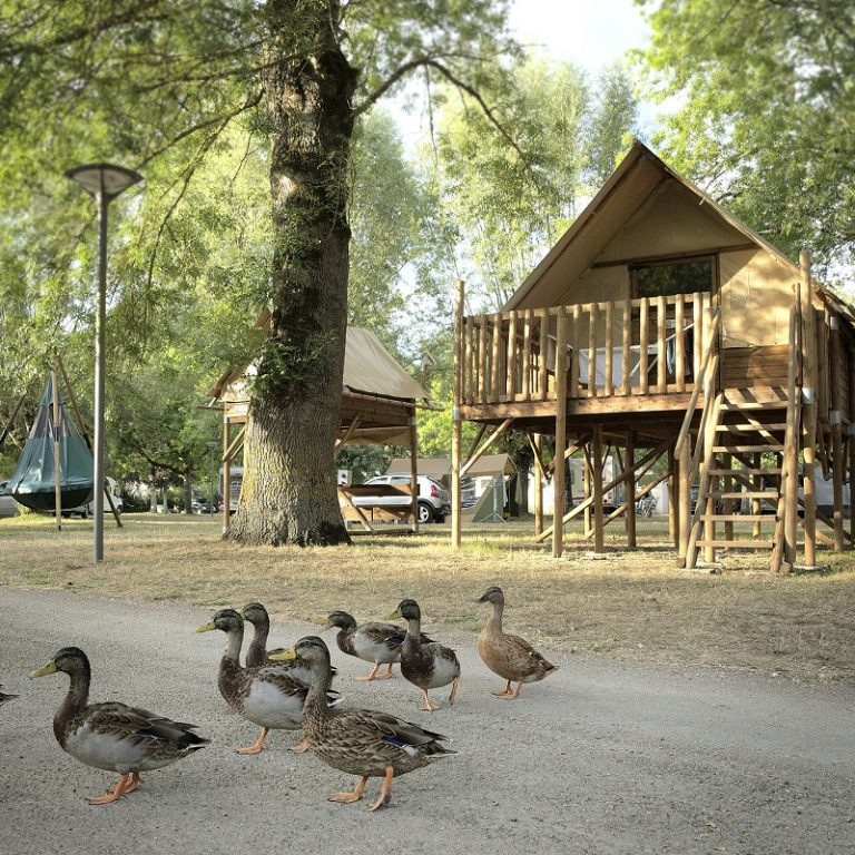 Camping Onlycamp Le Sabot-7
