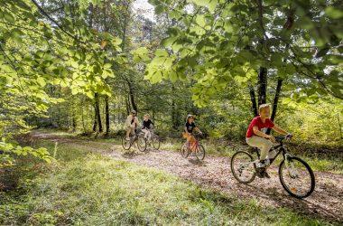 Forêt domaniale de Loches-cyclo-loches-valdeloire