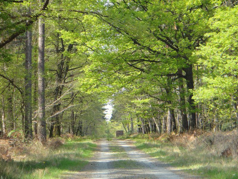 Bivouac et randonnée en forêt - Camping sauvage dans le Parc Naturel Régional Loire Anjou Touraine