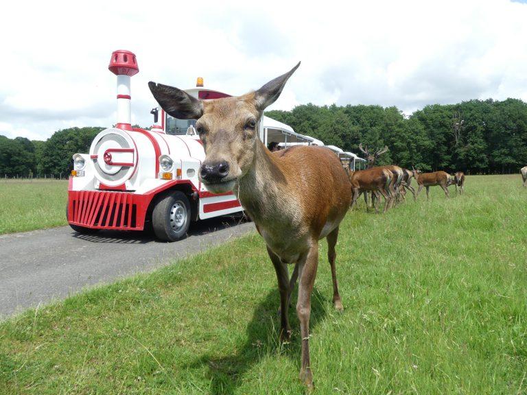 Réserve de Beaumarchais – Les grands gibiers d'élevage en Safari Train-7