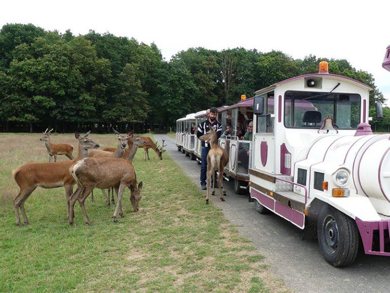 Réserve de Beaumarchais – Les grands gibiers d'élevage en Safari Train-1