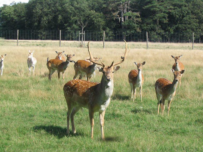 Réserve de Beaumarchais – Les grands gibiers d'élevage en Safari Train-6