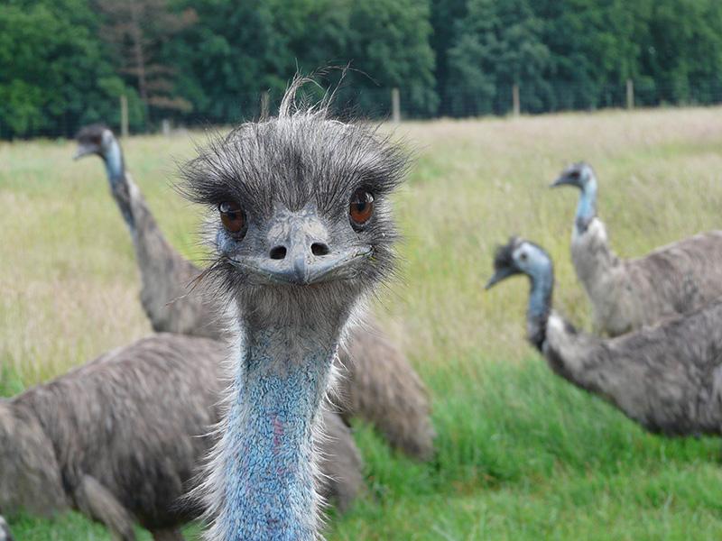 Réserve de Beaumarchais – Les grands gibiers d'élevage en Safari Train-4
