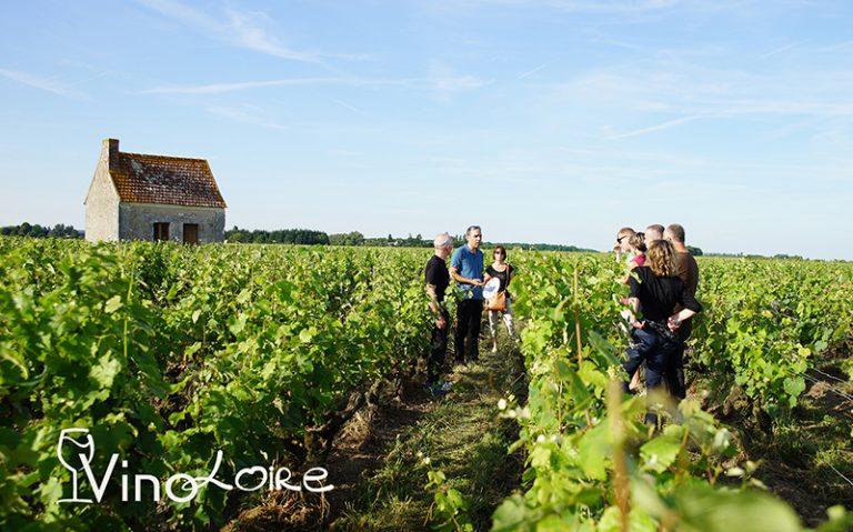 Vinoloire Wine-tours-13