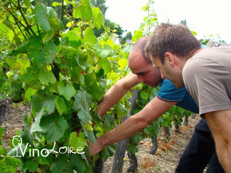 Vinoloire Wine-tours-23