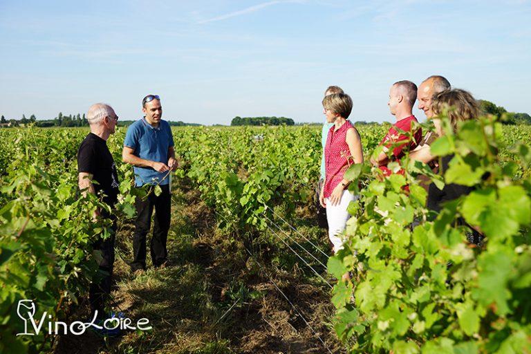 Vinoloire Wine-tours-1