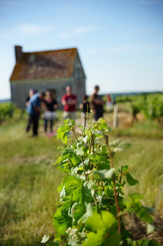 Vinoloire Wine-tours-8