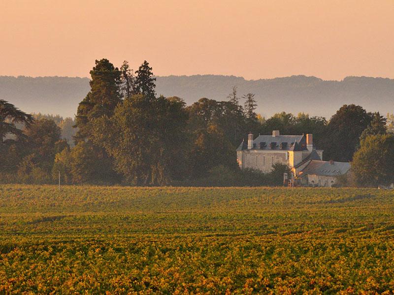 Visite de domaines viticoles : Château de Minière
