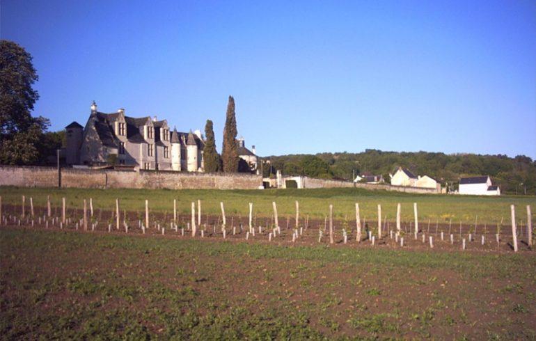 Château de la Vauguyon-1