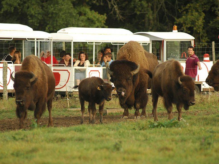 Réserve de Beaumarchais – Les grands gibiers d'élevage en Safari Train-5