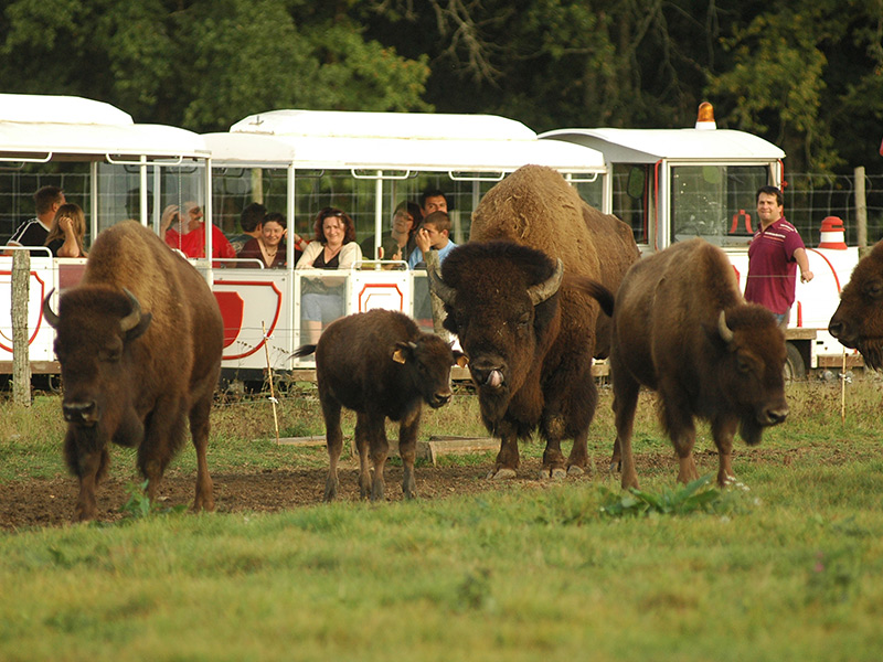 Réserve de Beaumarchais – Les grands gibiers d'élevage en Safari Train-2