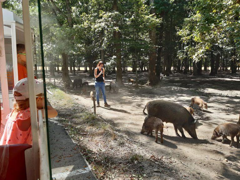 Réserve de Beaumarchais – Les grands gibiers d'élevage en Safari Train-3