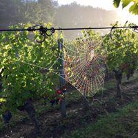 Vignobles du Paradis-9